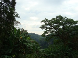 Xalapa jungle