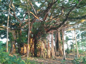 port arbre