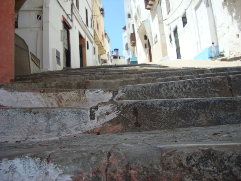Des escaliers vus depuis la hauteur d'un chat